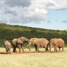 The park is home to a high density of elephants,...