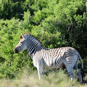 Beside elephant, other common species include kudu, warthog and zebra.