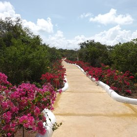 ...it leads out onto a path which takes you through tropical gardens...