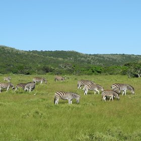 …into the east of Kariega, which hosts mainly smaller wildlife and plenty of antelope.