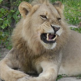 Duma Tau, which means 'roar of the lion', is situated in Botswana's Linyanti Reserve...