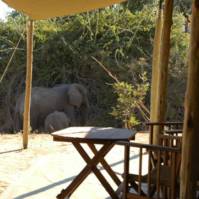 At Kigelia you're never far from the wildlife.