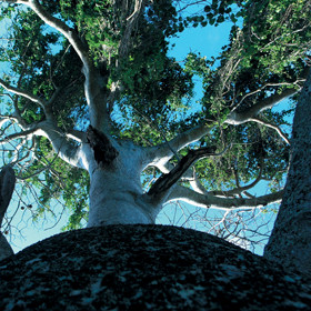 At Chole Mjini, Moja tree-house is built high in an ancient baobab tree ...