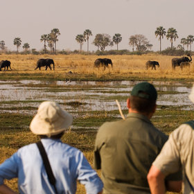 Walking safaris in Botswana