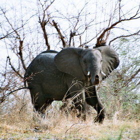 Damaraland is home to desert-adapted elephants.