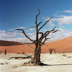 ... such as the iconic Dead Vlei.
