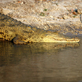 .. and a great place to seek out crocodiles.