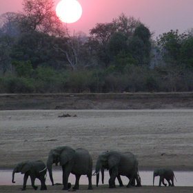 When the sun sets, continue on a night drive to see elephants starting their evening rituals...