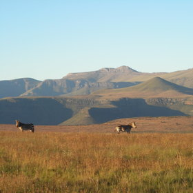 ...which is the Cape's best area for game viewing, for example zebra...