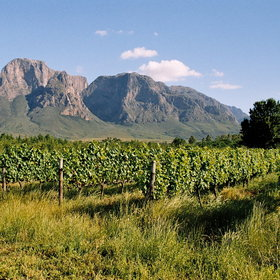 ...are the Cape's main wine producing regions.