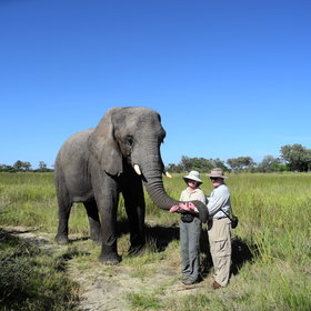 whilst walking with habituated elephants is even possible at several camps.