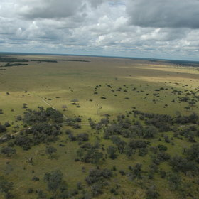 ... famed for the huge open grassland that was once the Savuti Marsh.