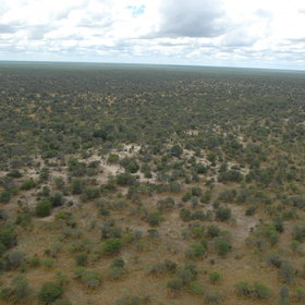 Far south of the Chobe River, in the dry heart of the national park, lies the Savuti area ...