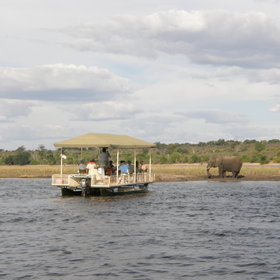 We think that the best way to observe the Chobe's wildlife is often from a boat ...