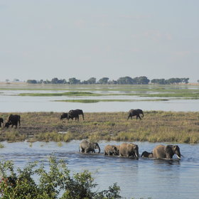 The Chobe National Park covers a large area of the northern Kalahari...