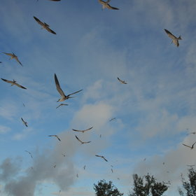 ...while the skies above the island are filled with circling fishing parties.