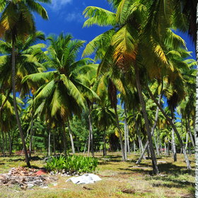 ...it still has it's own coconut plantation today...