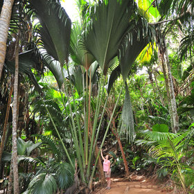 ...to the wandering around the lush Vallee de Mai...
