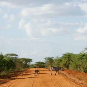 En route to your lodge it's common to see wildlife crossing the roads - either red earth…