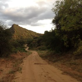 Game drives on the many winding roads of Tsavo West lead to unexpected discoveries…