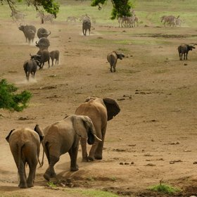 Taita Hills Wildlife Sanctuary also has plenty of elephants…