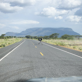 Why did the ostrich cross the road? Because there was finally a road (north of Isiolo).