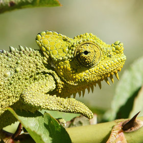…and fascinating chameleons always around, especially in the forested, higher areas.
