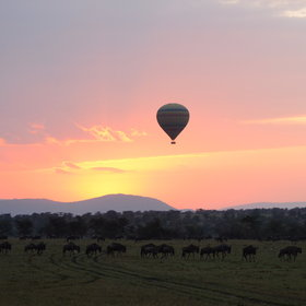 The other singular attraction of the Maasai Mara is balloon flights at dawn.