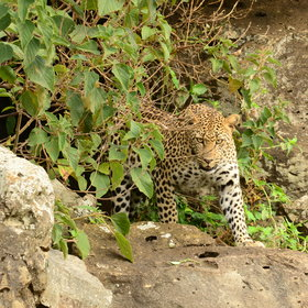 They know the area well, including Leopard Gorge, location for many a TV documentary.