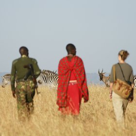 Southeast of Mara North Conservancy lies the Olare Motorogi Conservancy…