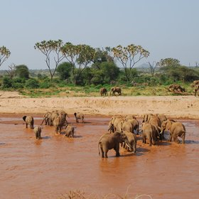 Elephants, the red river and doum palms characterise safaris in Samburu.