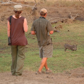 … close encounters with wildlife such as warthog…