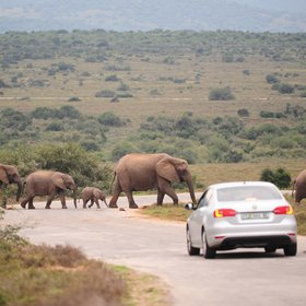 Addo Elephant National Park is located at the eastern end of South Africa's Cape.