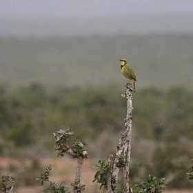 ...the national park hosts a rich birdlife,…