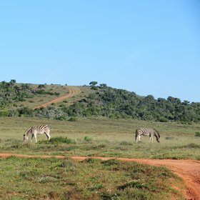Shamwari is a private game reserve located in South Africa's Eastern Cape.