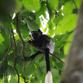 You might also chance upon some of the areas smaller primates, whilst on a forest walk.