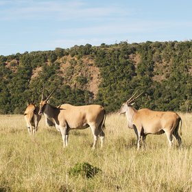 Instead, high densities of antelope and smaller wildlife make for some gentle game-viewing.