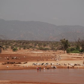 In the Samburu Reserve wildlife and birdlife are plentiful…