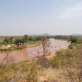 …thanks to the Ewaso Nyiro, northern Kenya's biggest river…