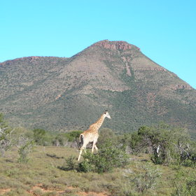 There is a variety of wildlife to spot; including giraffe ...