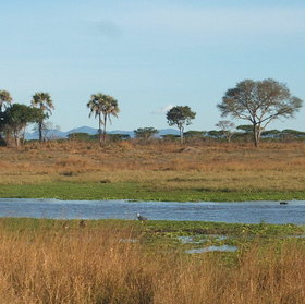 Katavi National Park with its varied woodlands is located in the far west of Tanzania.