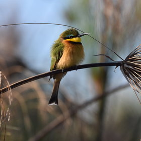 The Okavango Panhandle offers first class bird watching.