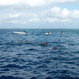 Popular activities around the east coast include snorkeling and dolphin spotting...
