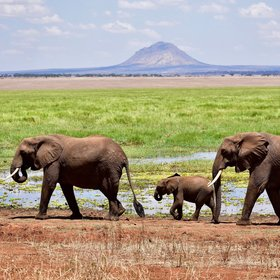 Tarangire National Park is famous for its prolific elephants.