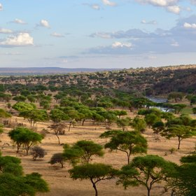 Tarangire's vegetation consists mostly of dry woodlands and open plains...