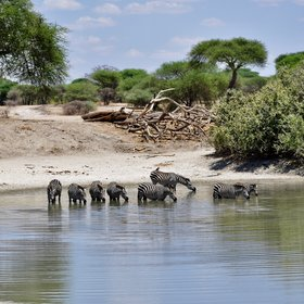 ... with several swamps and waterholes where animals come to drink ...