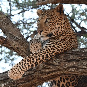 If you are lucky you may spot one of the park's very shy leopards…