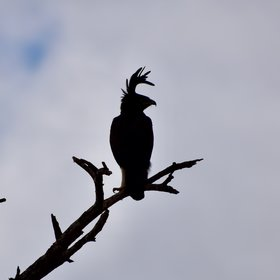 ... with species such as long crested eagles ...