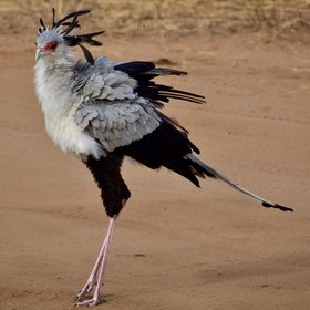 ... and secretary birds regularly being seen.