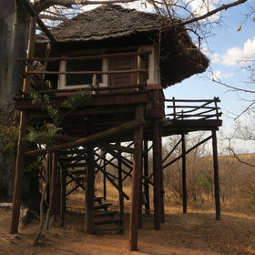 The camps and lodges in Tarangire National Park include Tarangire Treetops…